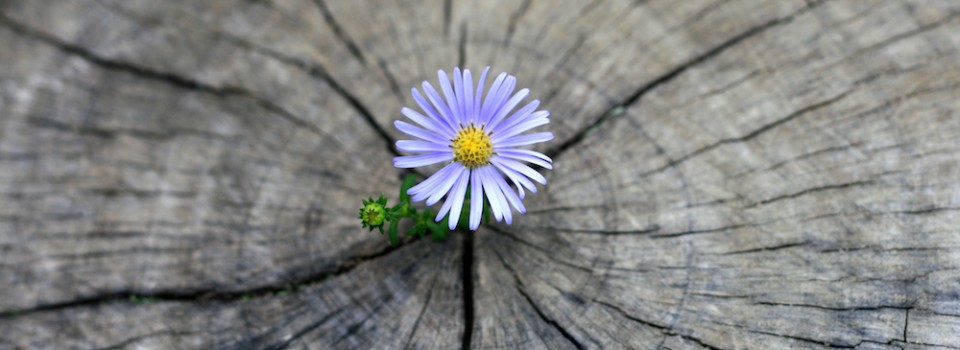 flower born on the stump
